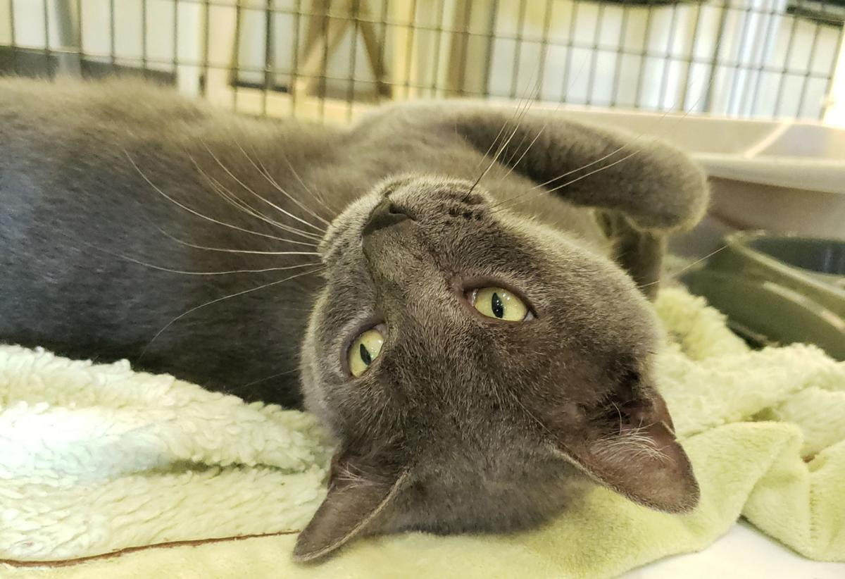 'Mama Boo' is shelter's Cat of the Week