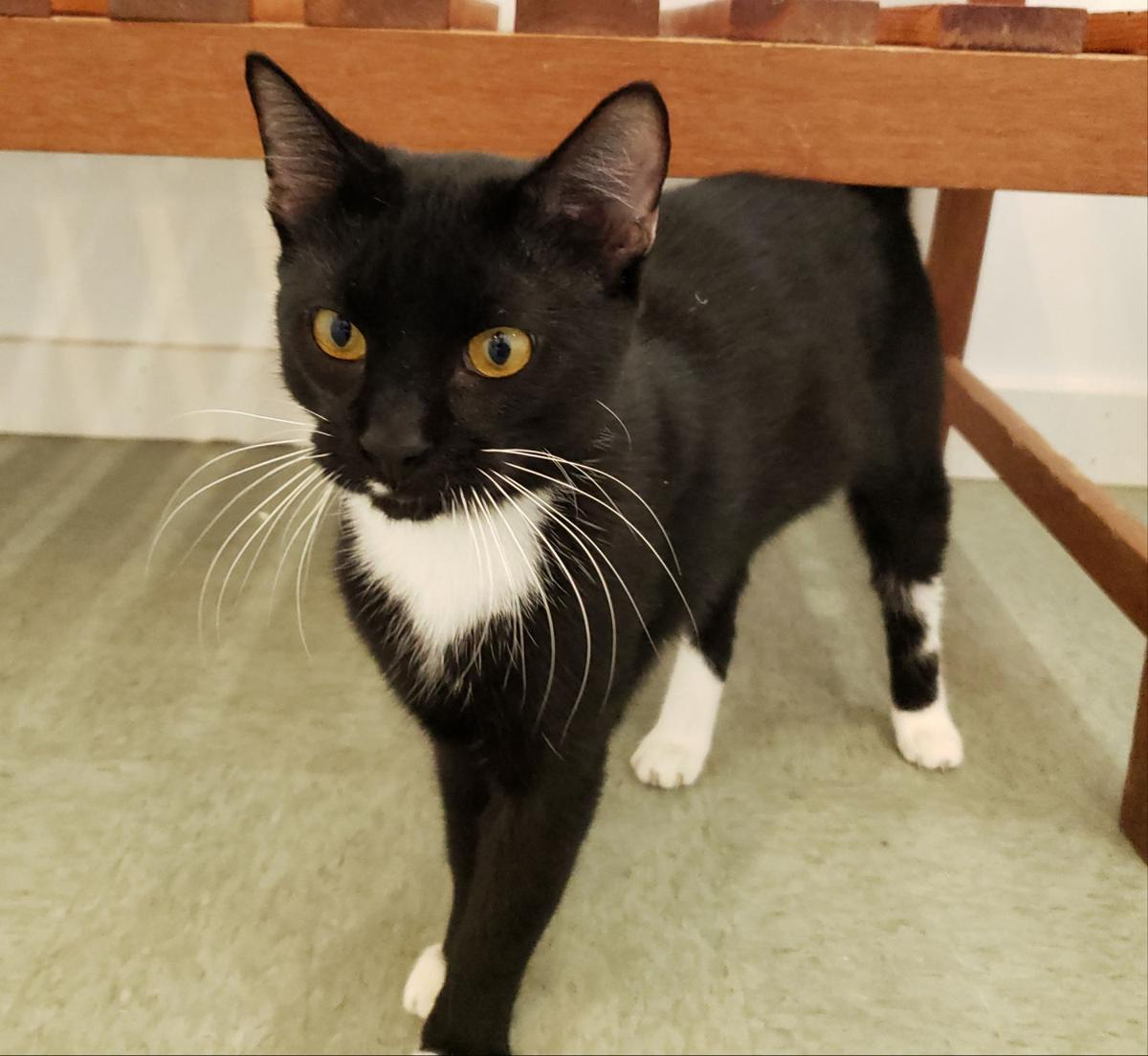 Tux is MOAS 'Cat of the Week'