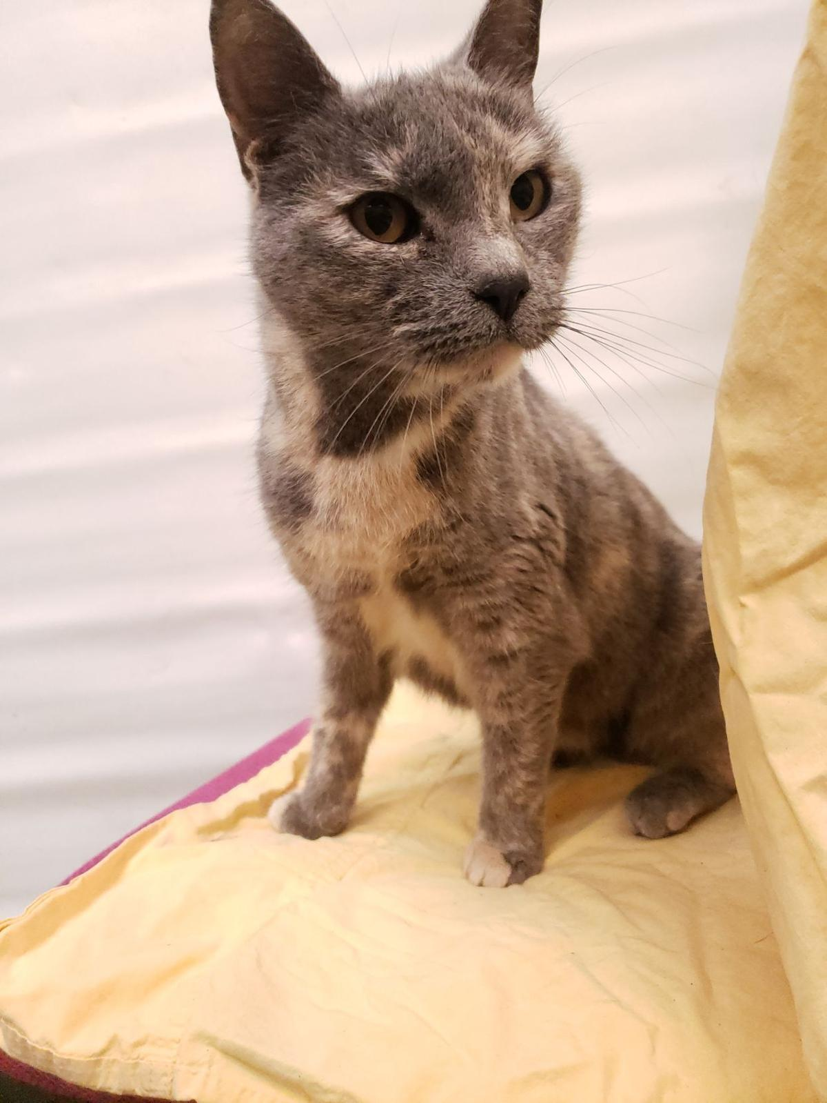 'Sadie' is animal shelter's 'Cat of the Week'