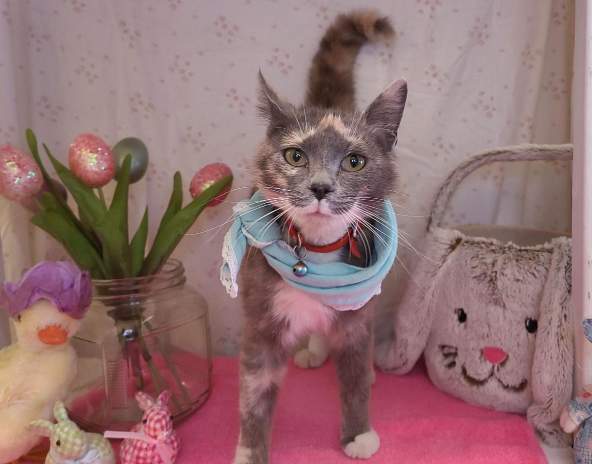 'Chou Chou' is shelter's Cat of the Week