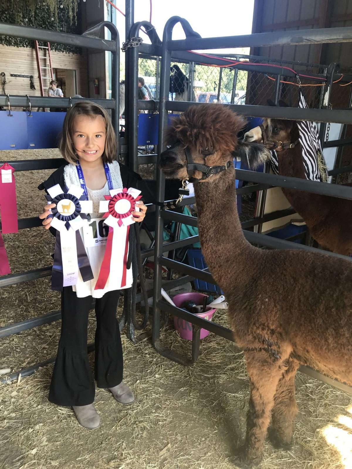Ascenzo places in llama show