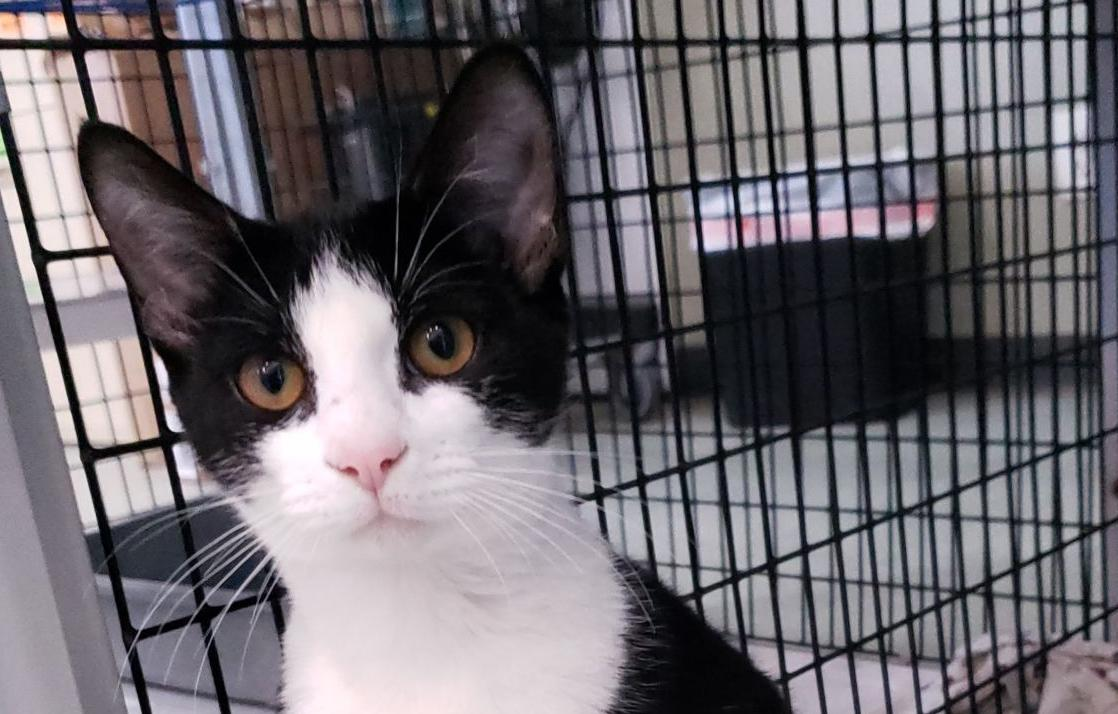 Anna is MOAS 'Cat of the Week'