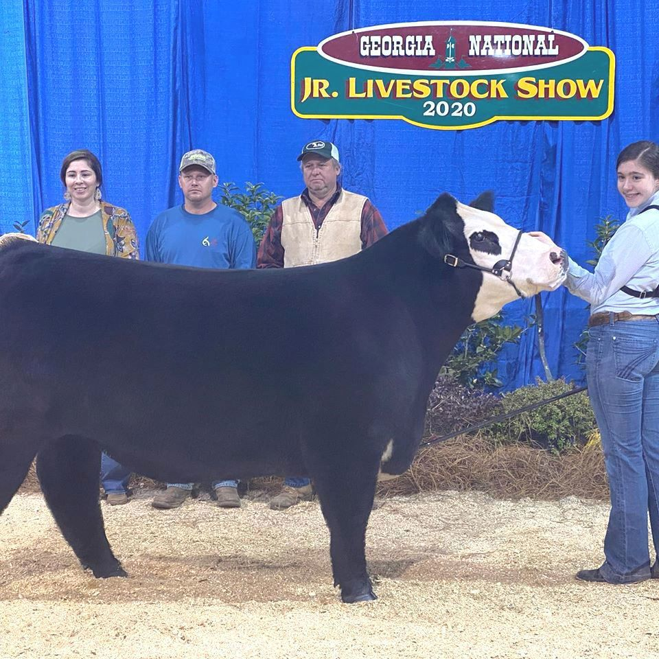 McDaniel competes in national livestock show