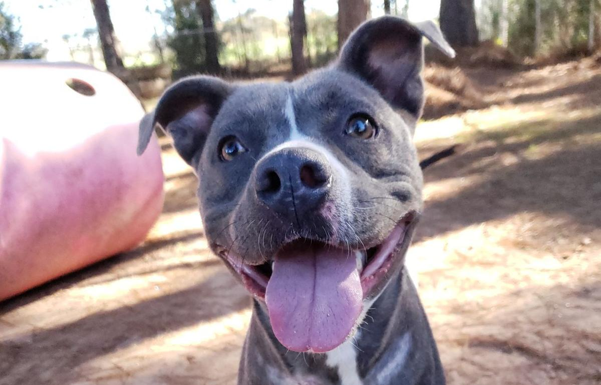 'Red' is animal shelter's 'Dog of the Week'