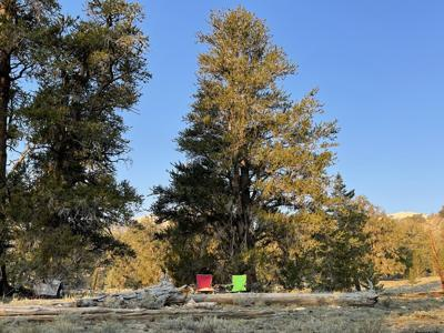 bristlecone dispersed camp photo