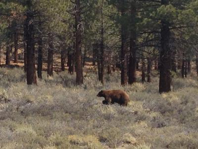bear story image