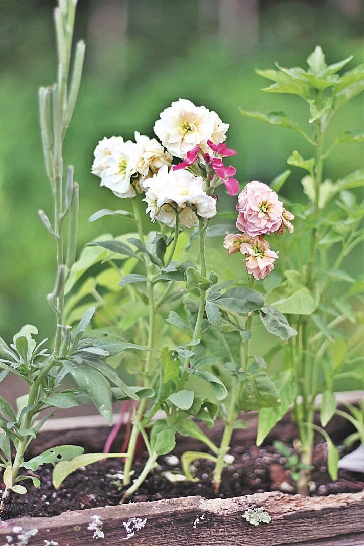 Tina Weikert: Selecting flowers for a garden of sweet perfume