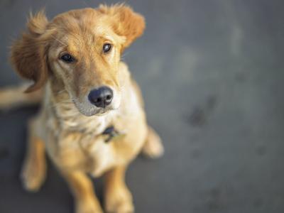 New bill makes animal cruelty a felony