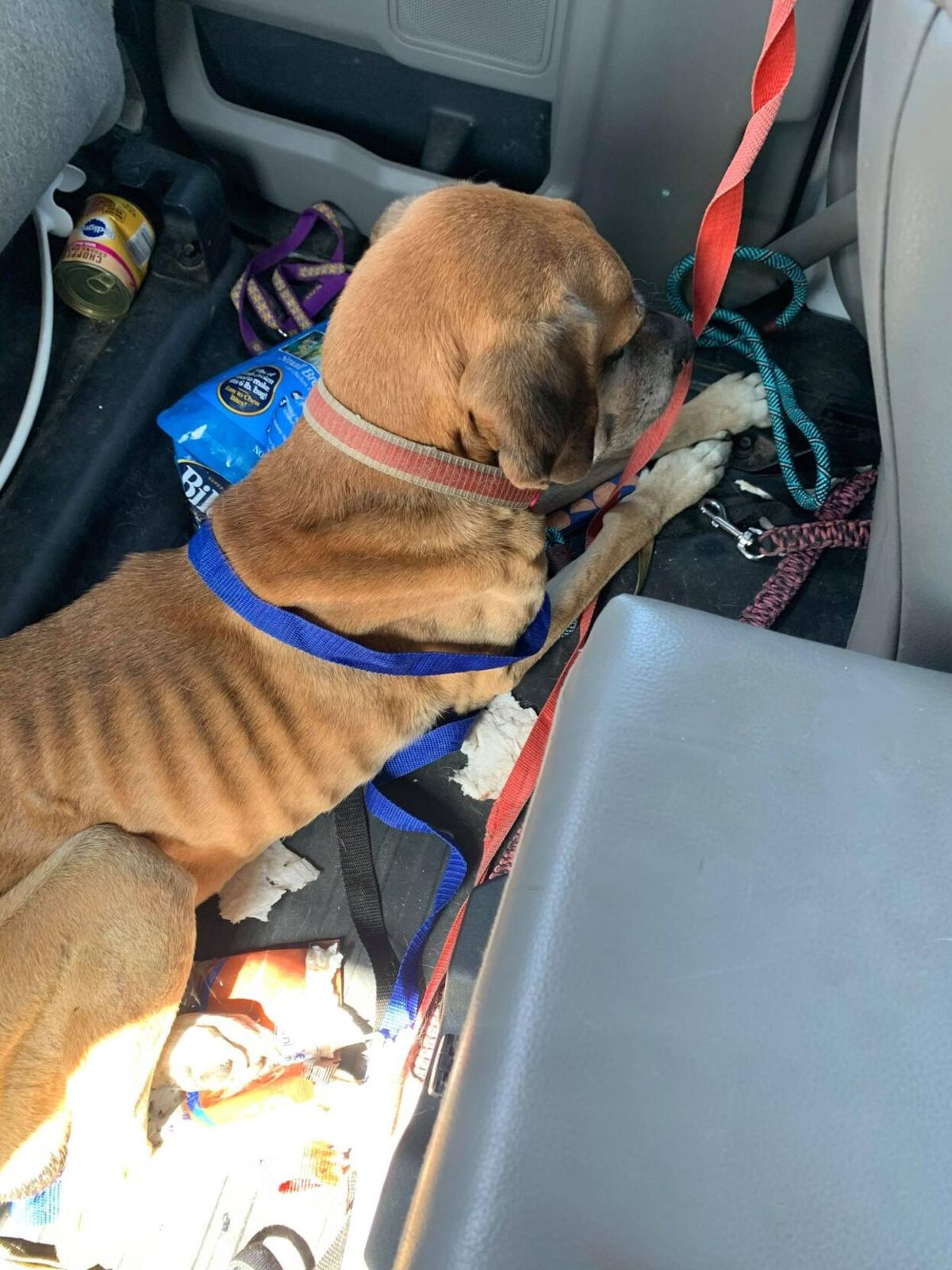 Animal control officers find dog suffering malnutrition, ask community for help