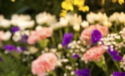 out-of-focus-flowers-main.jpg
