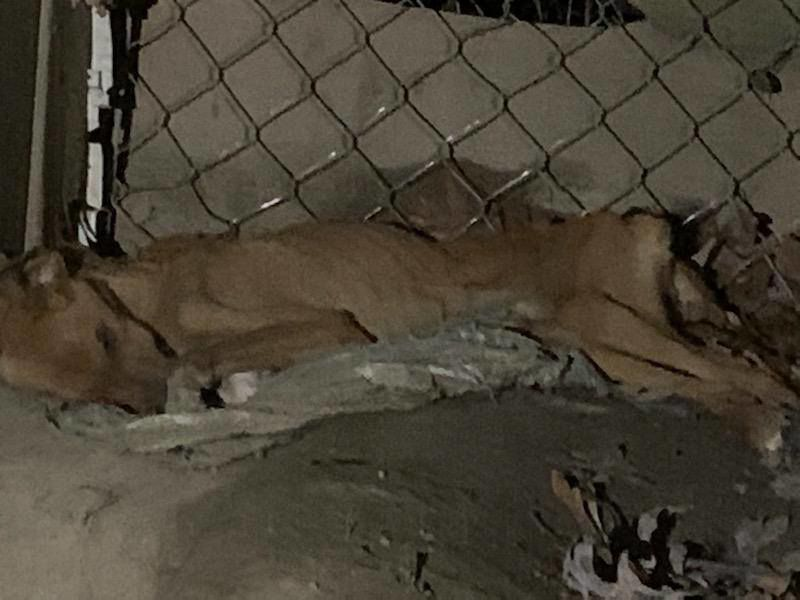 5 dogs dead, 16 dogs rescued from a home in Coffee County