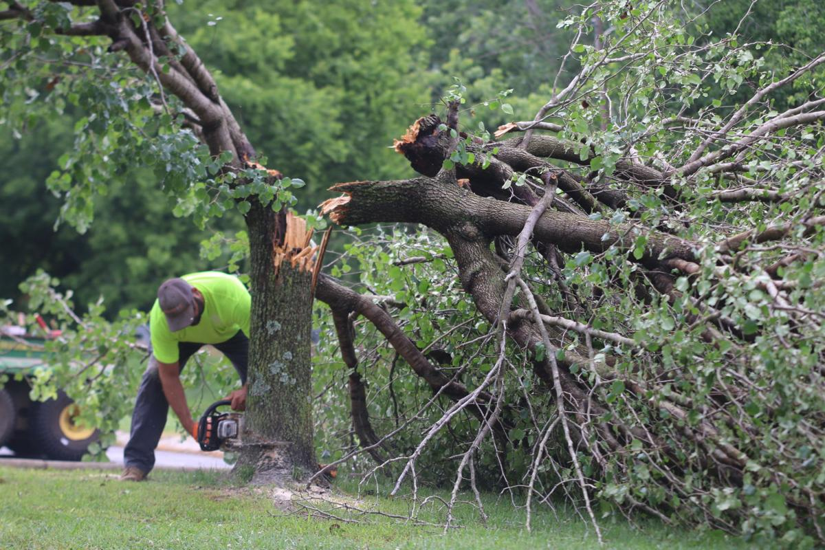downed tree - june storm 2019