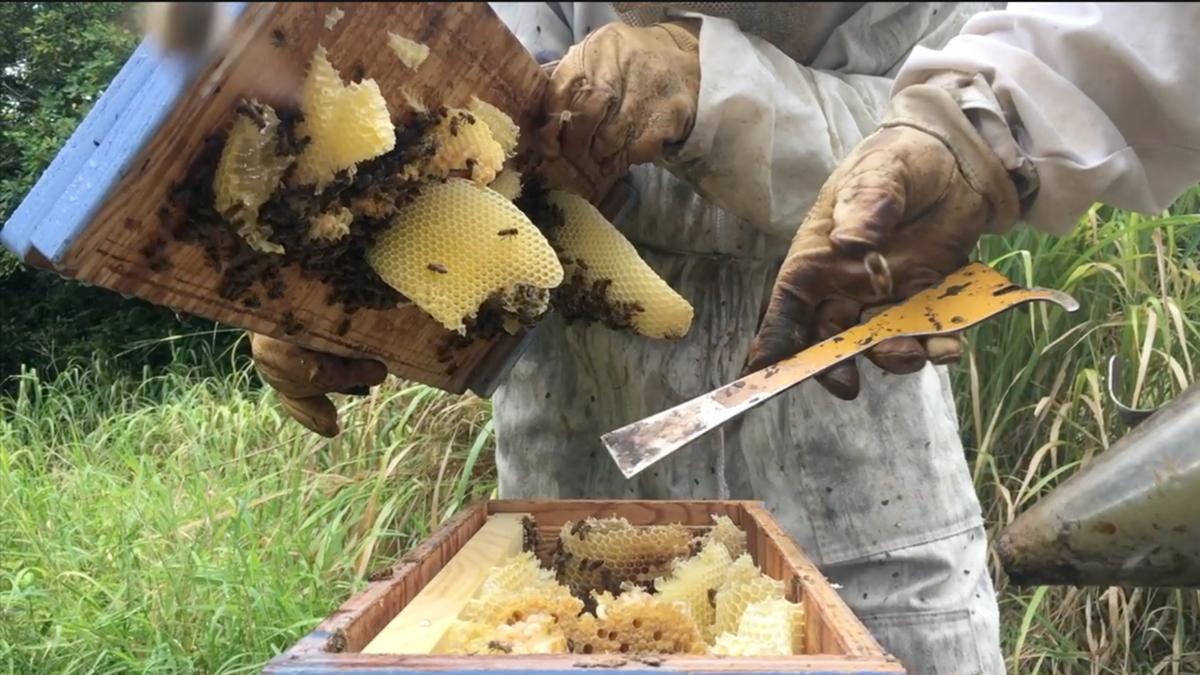 UH Mānoa Hopes to Grow Beekeeping