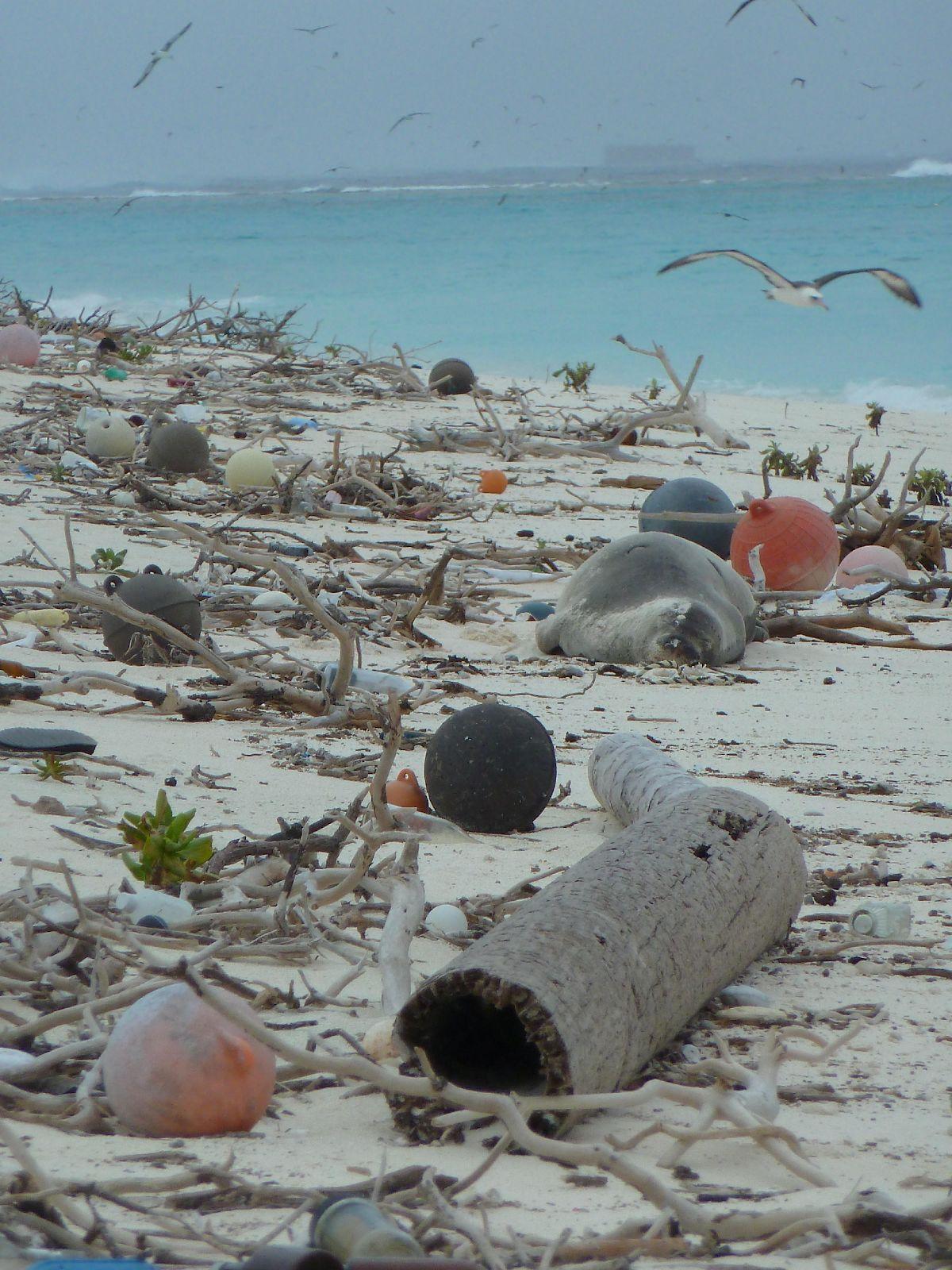 Sustainable Coastlines Hawai'i