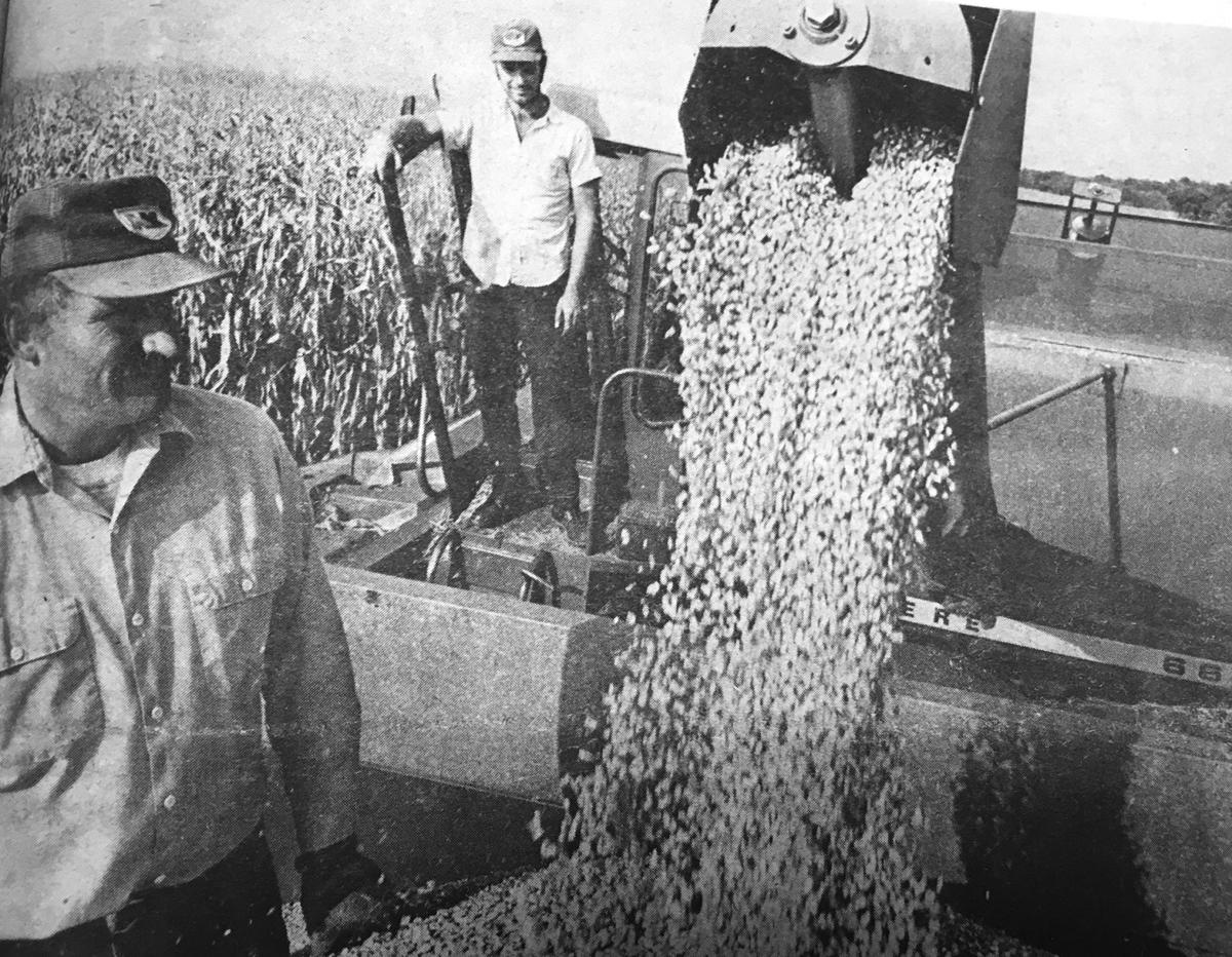 Harvest 1979 was well