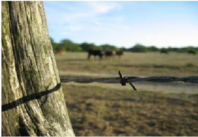 Texas A&M AgriLife photo