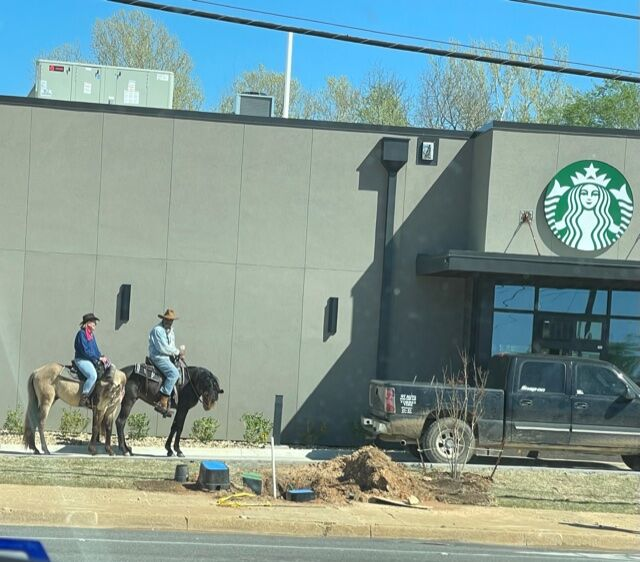 Horses starbucks 2.jpeg