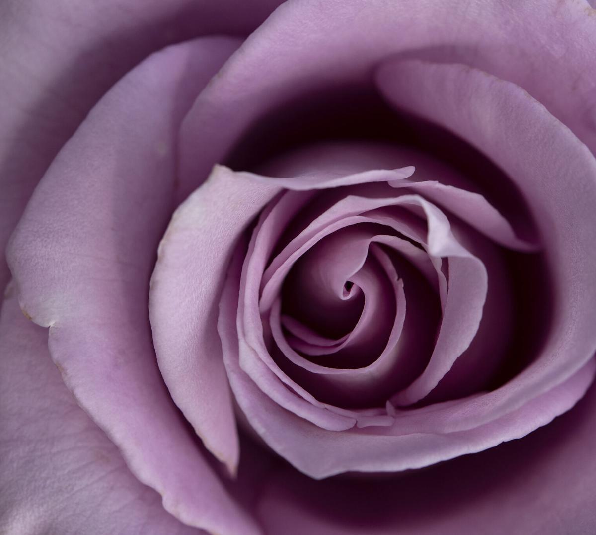 SMIL_20190430_Rose_Garden_10.jpg
