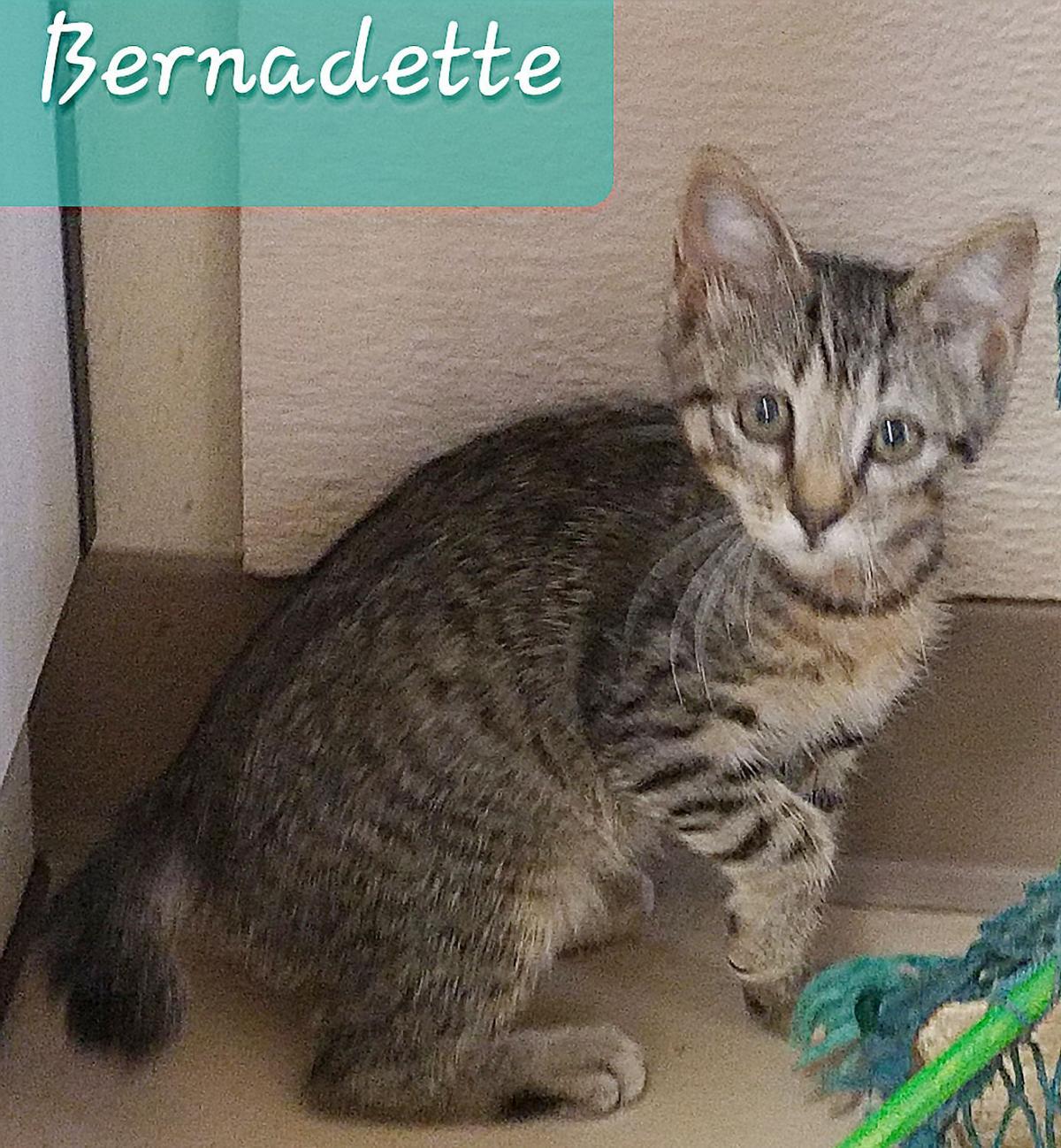 Pet Bernadette