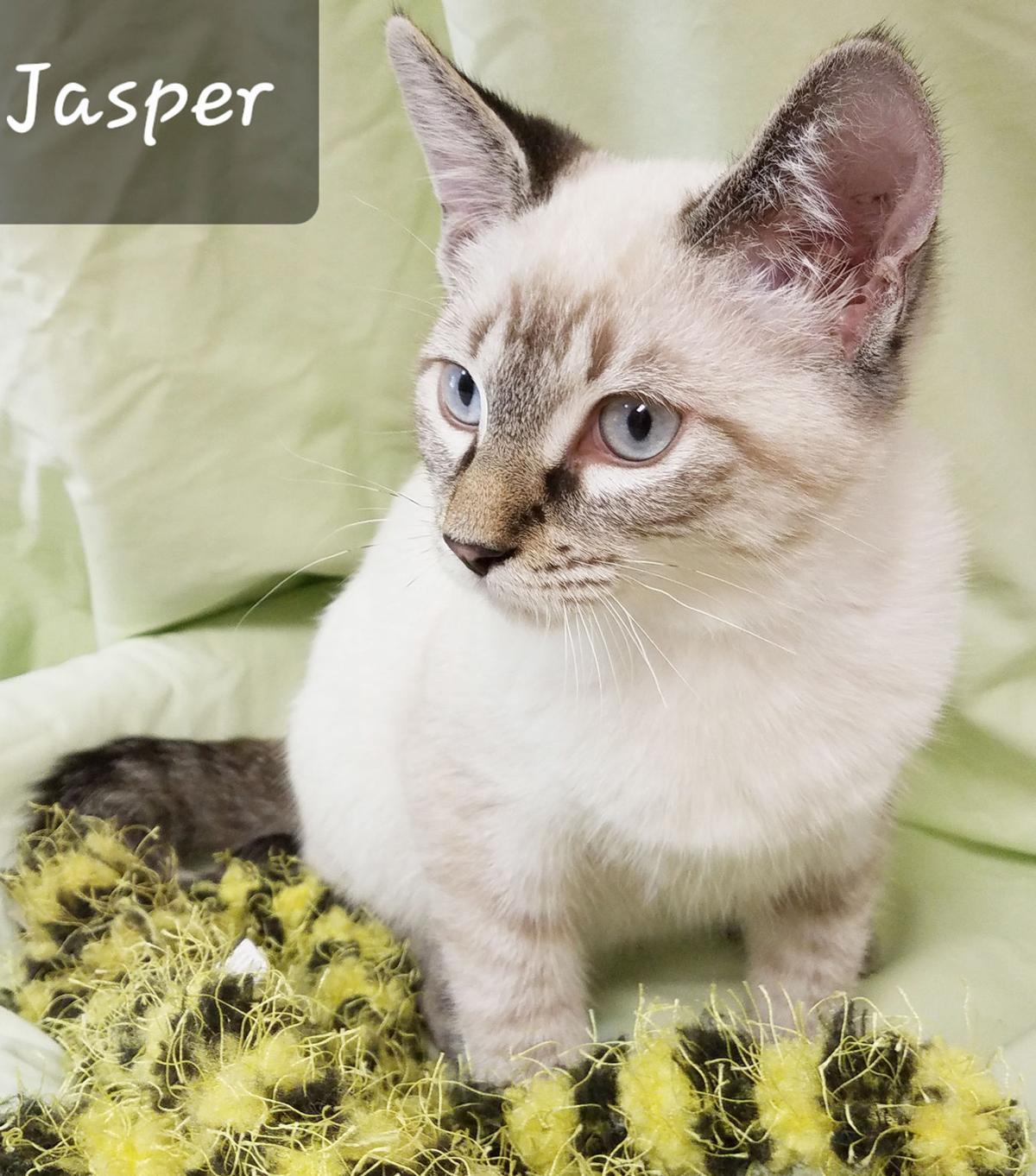Pet Jasper