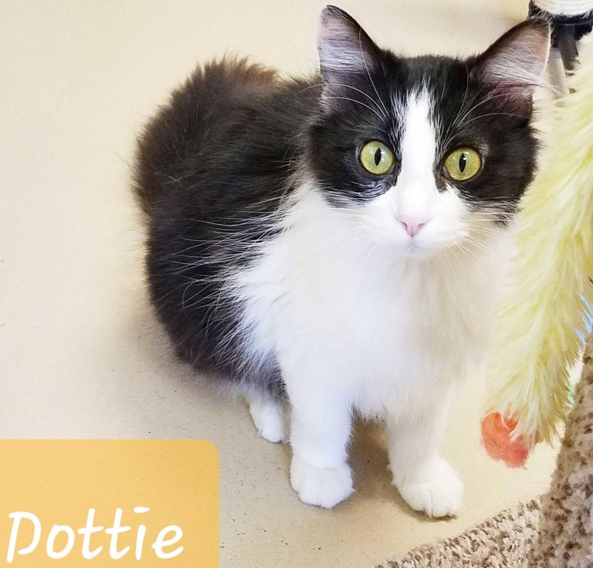 Pet Dottie