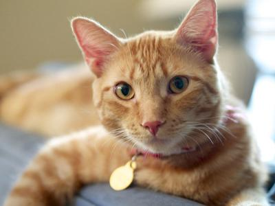 pet cats.jpg