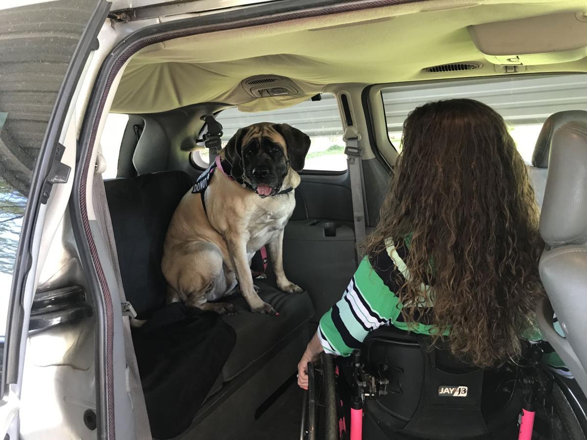 Ellie in van