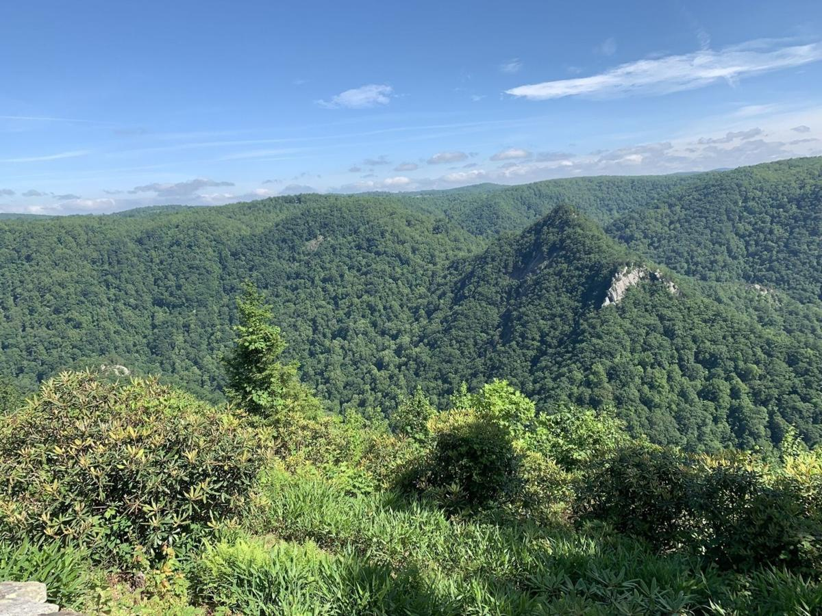 buzzards roost trail view