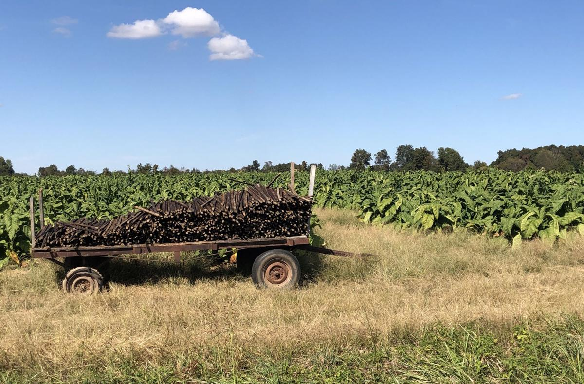 Tobacco stakes
