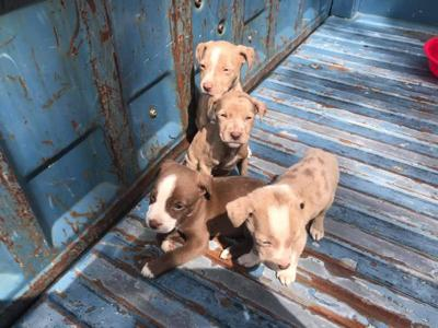 5 puppies found in barbecue pit