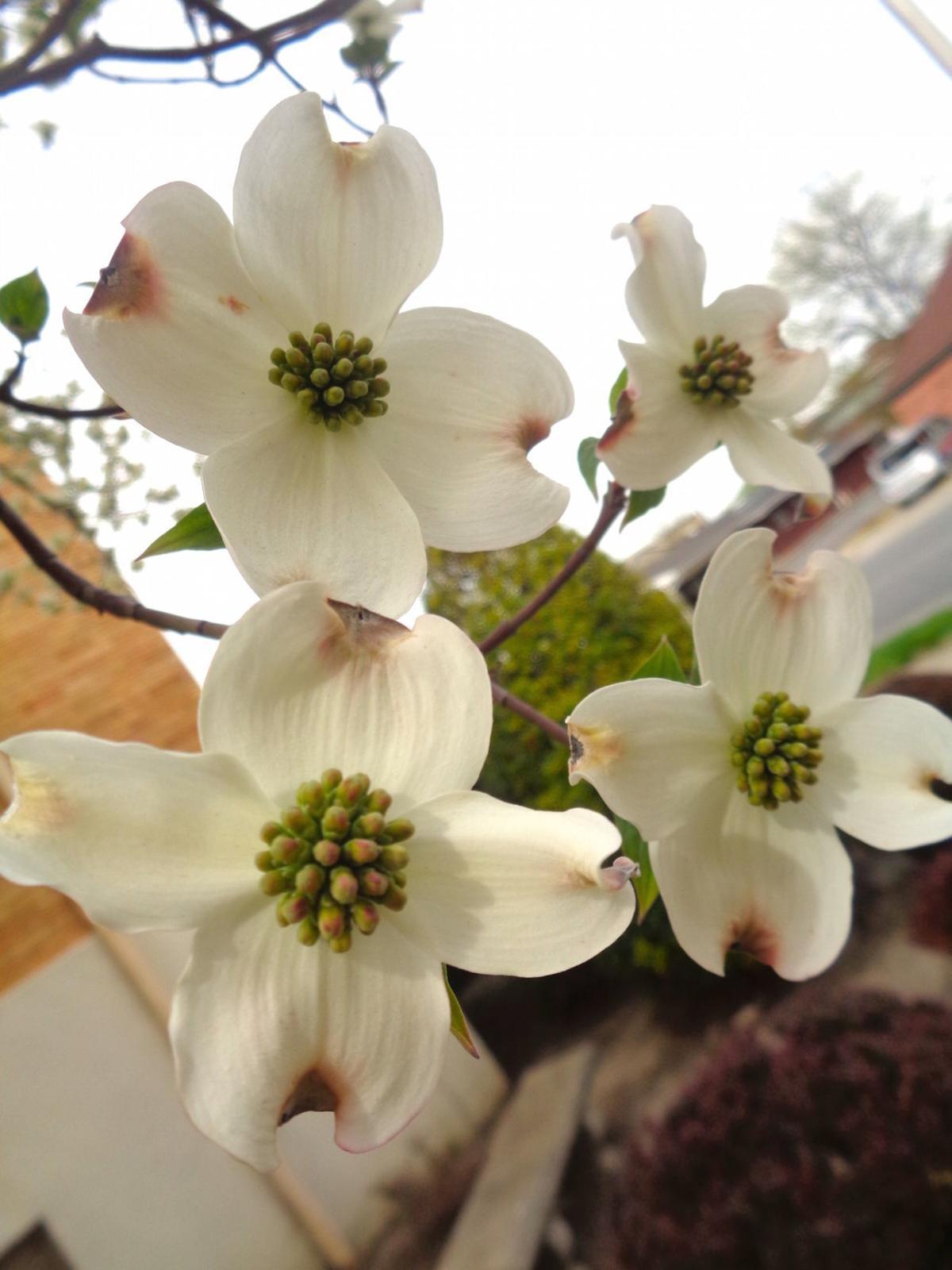 Spring photo 2