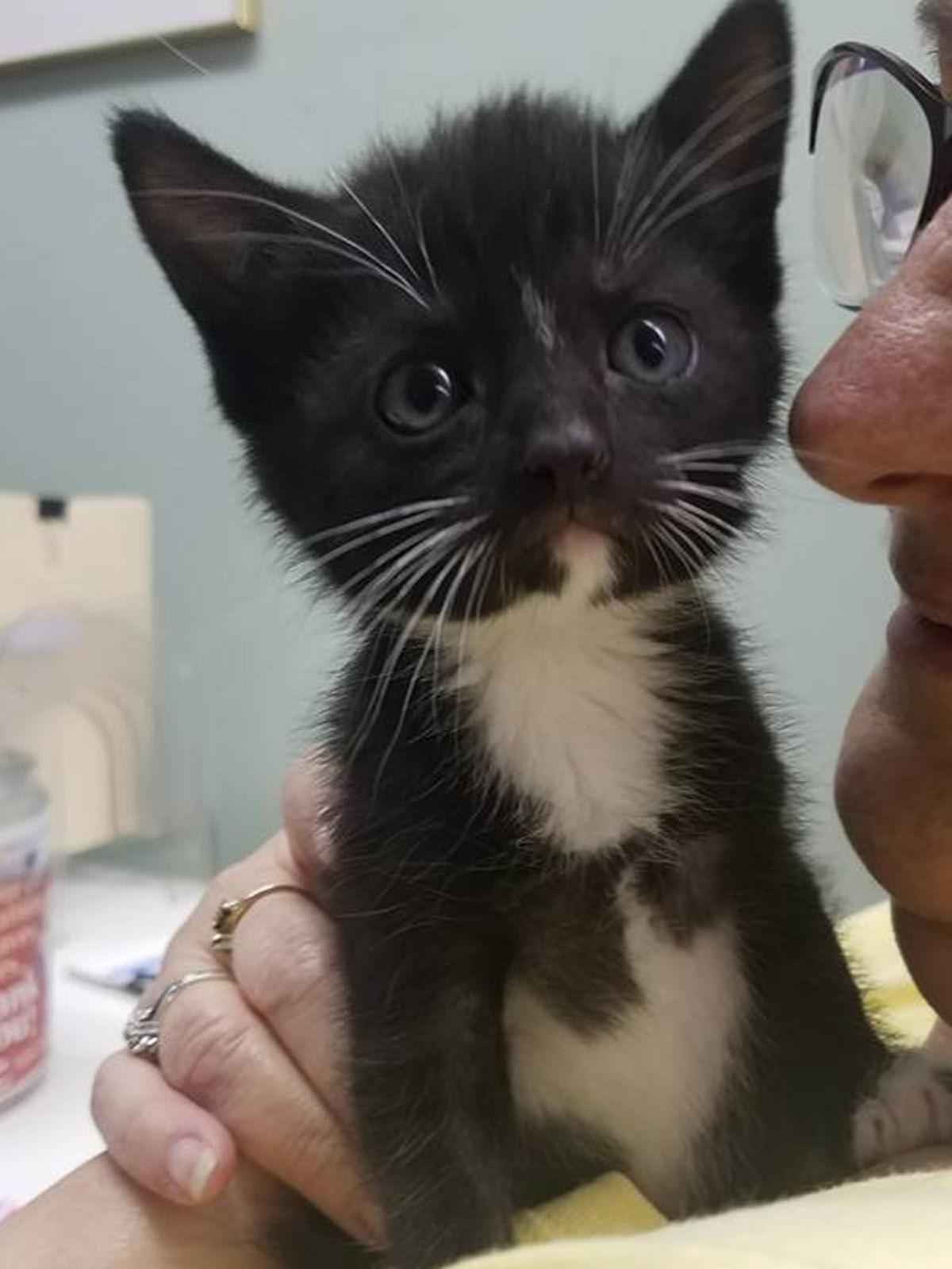 15 Pets-Kitten 1.jpg