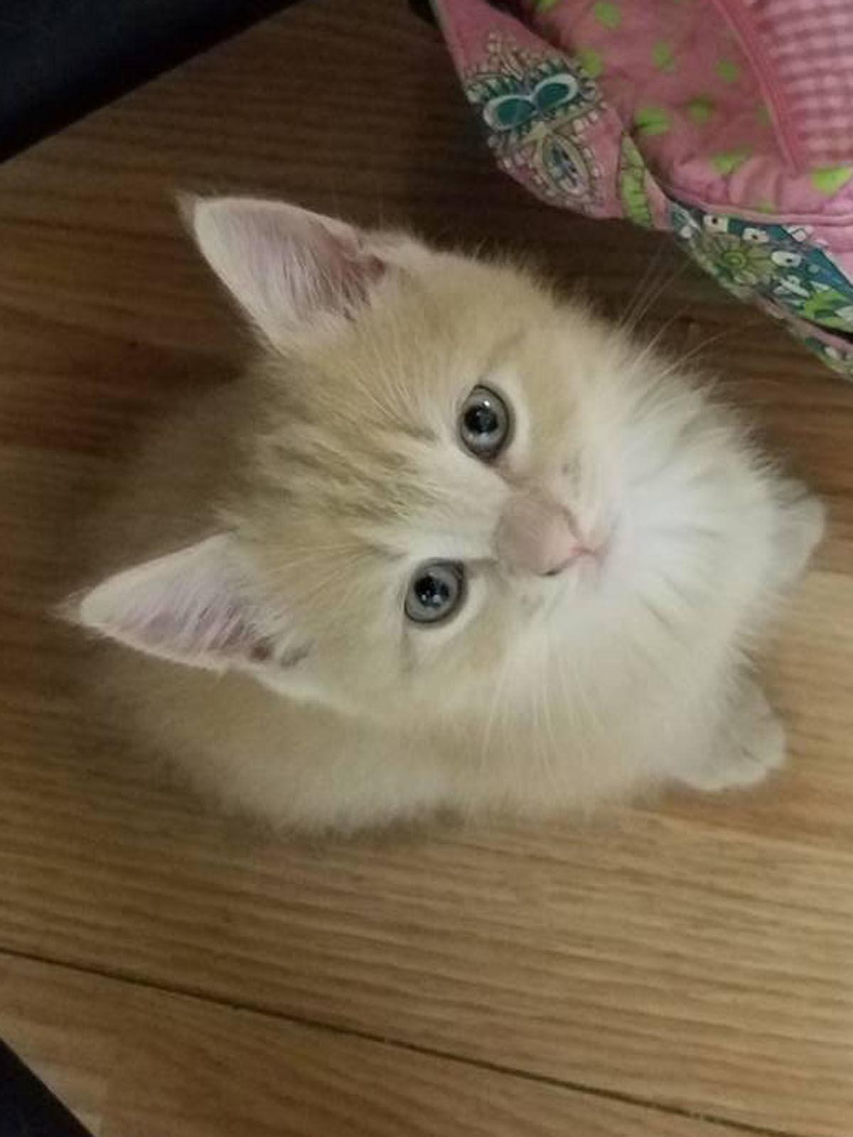 15 Pets-Kitten 2.jpg