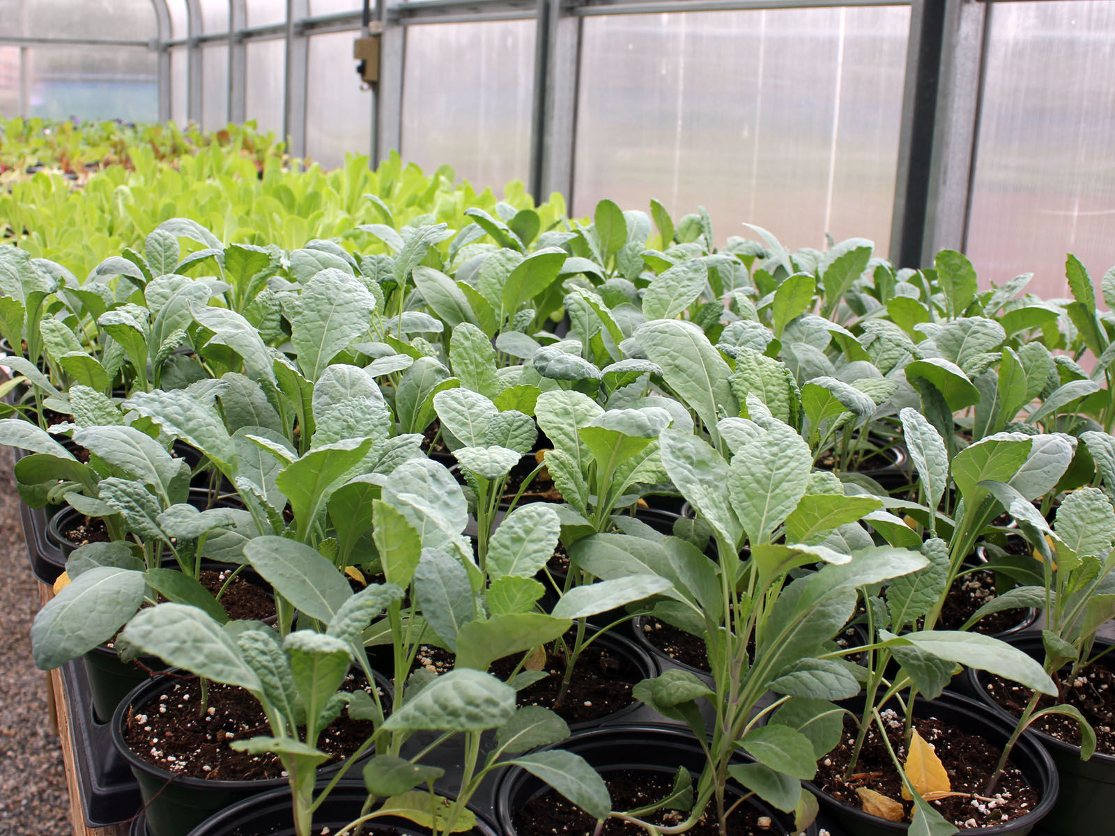 Going Green: Annuals, Vegetables And Flowers For Sale At Titan Greenhouse