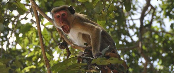 Scott Hollifield: The triumphant return of the Monkey Action News Team