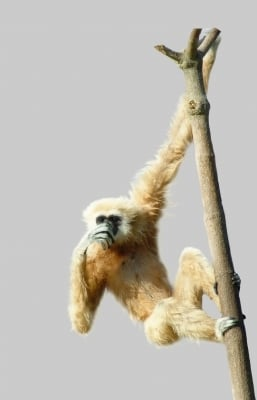 Scott Hollifield: Monkey Action News Team back by semi-popular demand