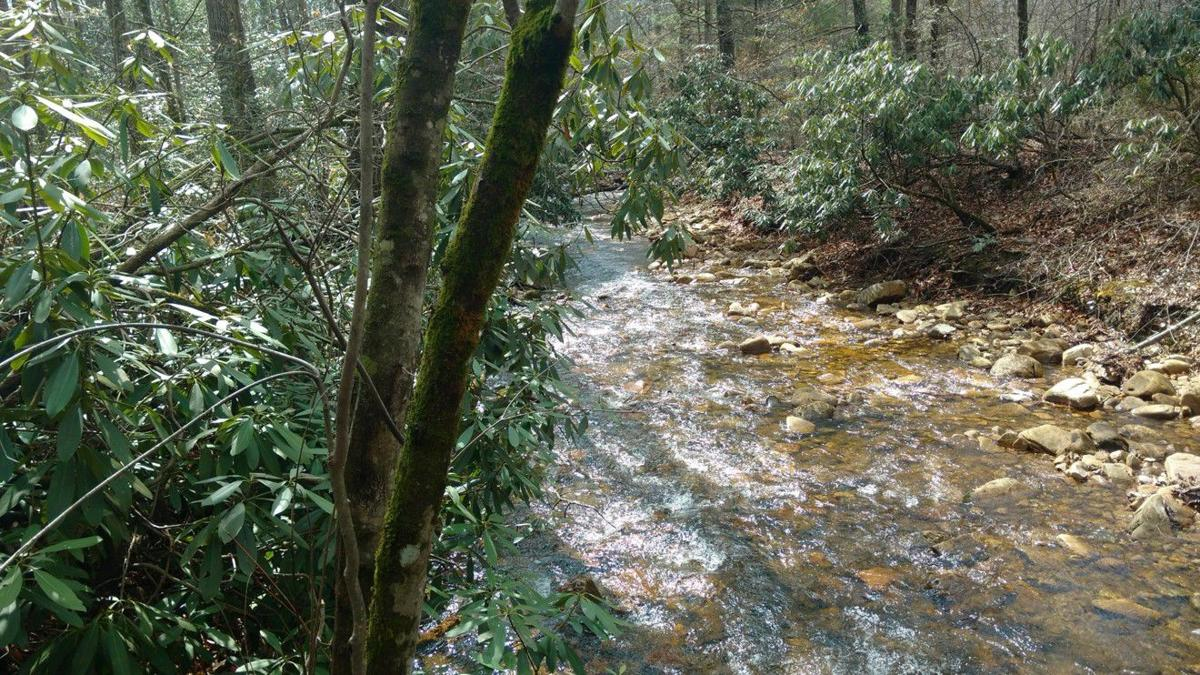 Foothills Conservancy helps expand Lake James State Park