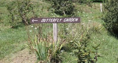 butterfly garden photo.jpg