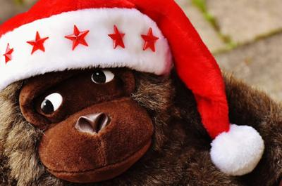 Scott Hollifield: No Christmas cheer for the Monkey Action News Team