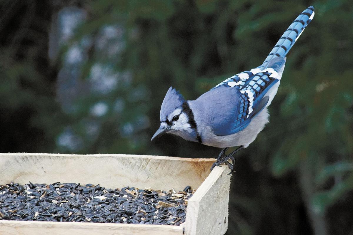 092221-mmn-nws-birds-1.jpg