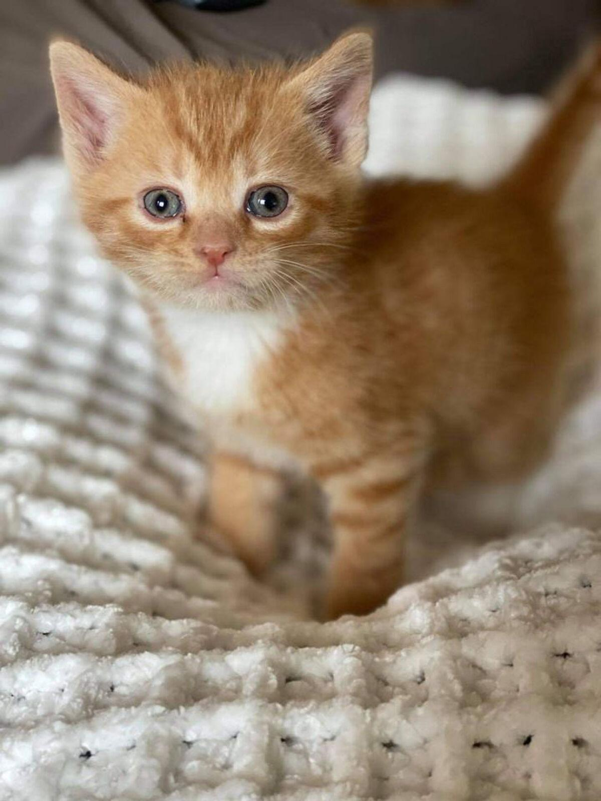11 Pets Sherbert.jpg