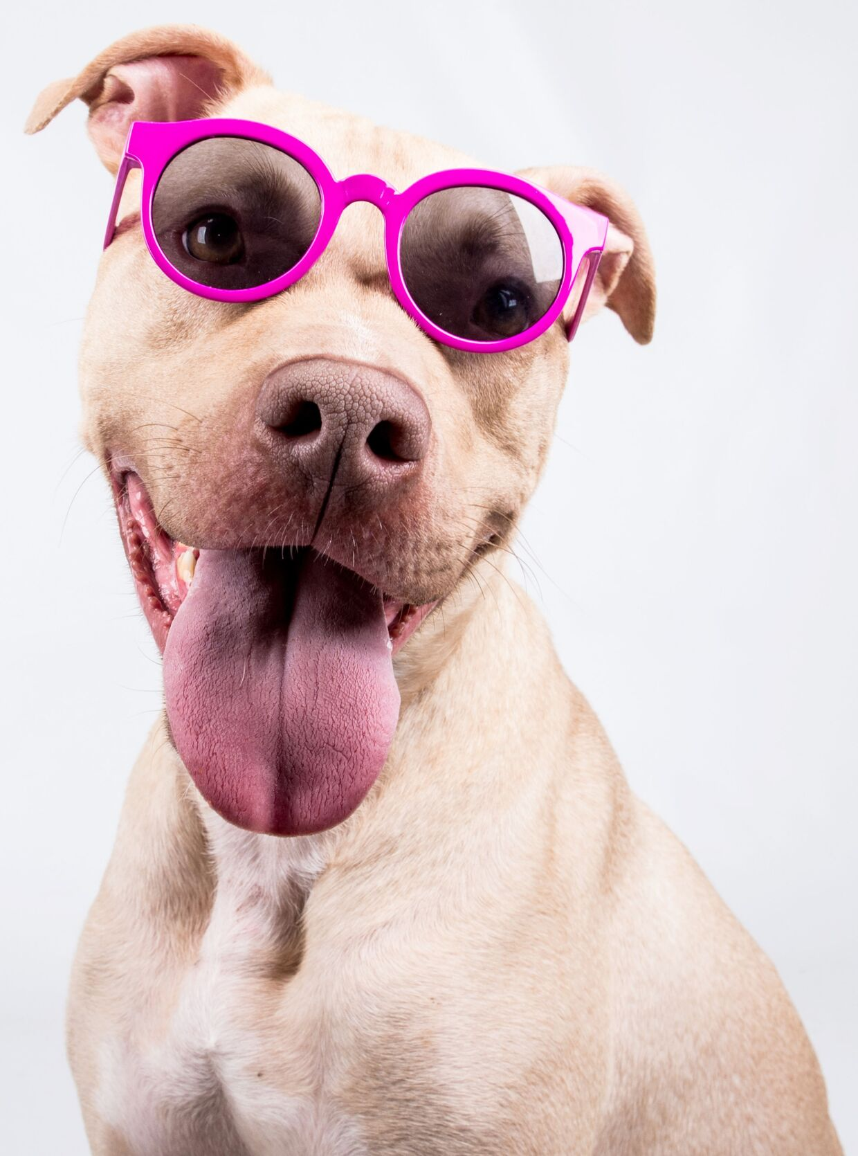 033121_MNS_LifeLine_spring_002 Kayden the dog