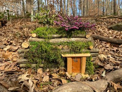 Enchanted Woodland Trails
