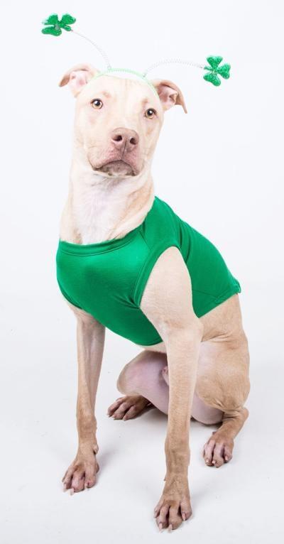 031021_MNS_LifeLine_Lucky_001 Kayden the dog