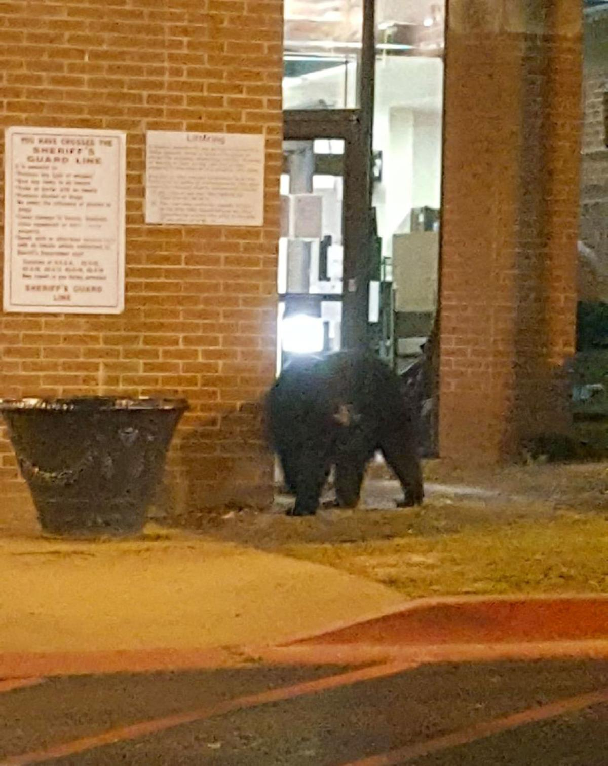 fulton county jail gets visit from bear | neighbornewsonline