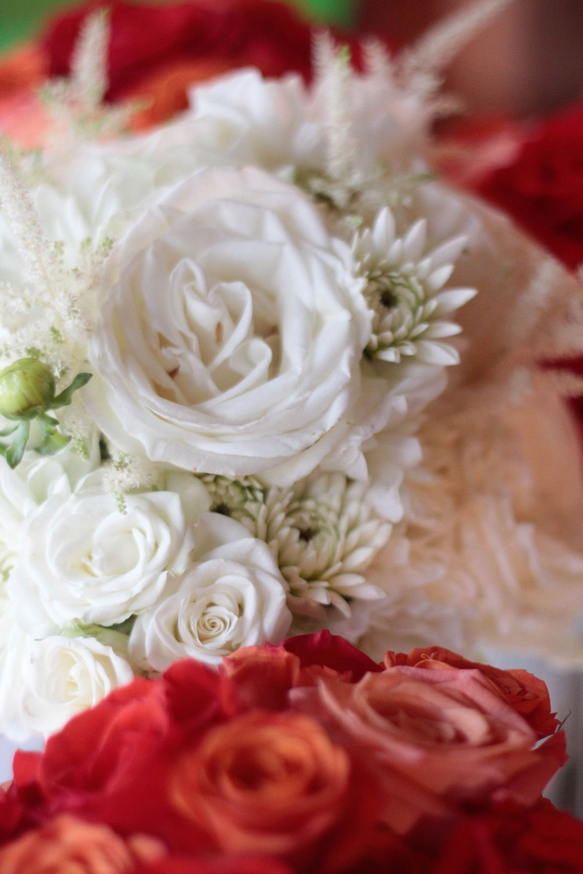 View More: http://blushmagnoliaphotography.pass.us/bobbyandbrianagetmarried
