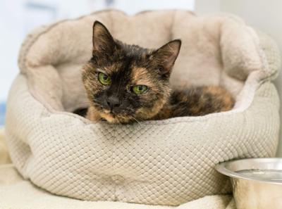 033121_MNS_Opal Opal the cat