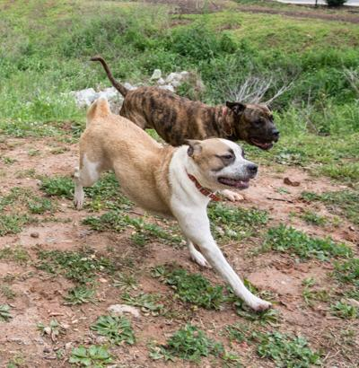 Dogs playing at LifeLine in DeKalb