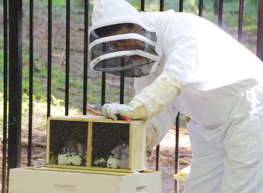Sandy Springs designated as a Bee City USA affiliate to help save pollinators