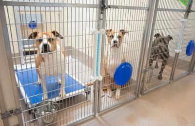060921_MNS_LifeLine_20_deal_001 three adoptable dogs